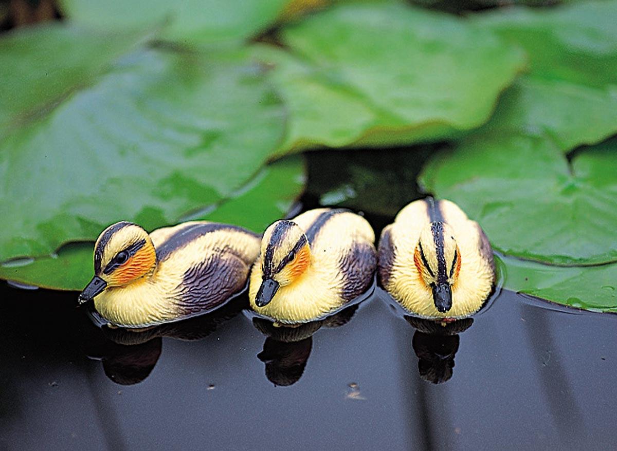 Caneton Jaune décoratif de bassin à poser