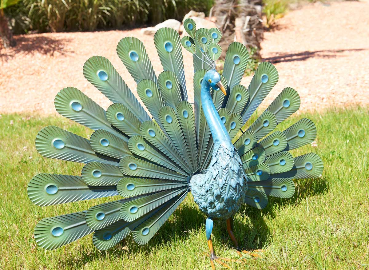 Paon décoratif Peacock