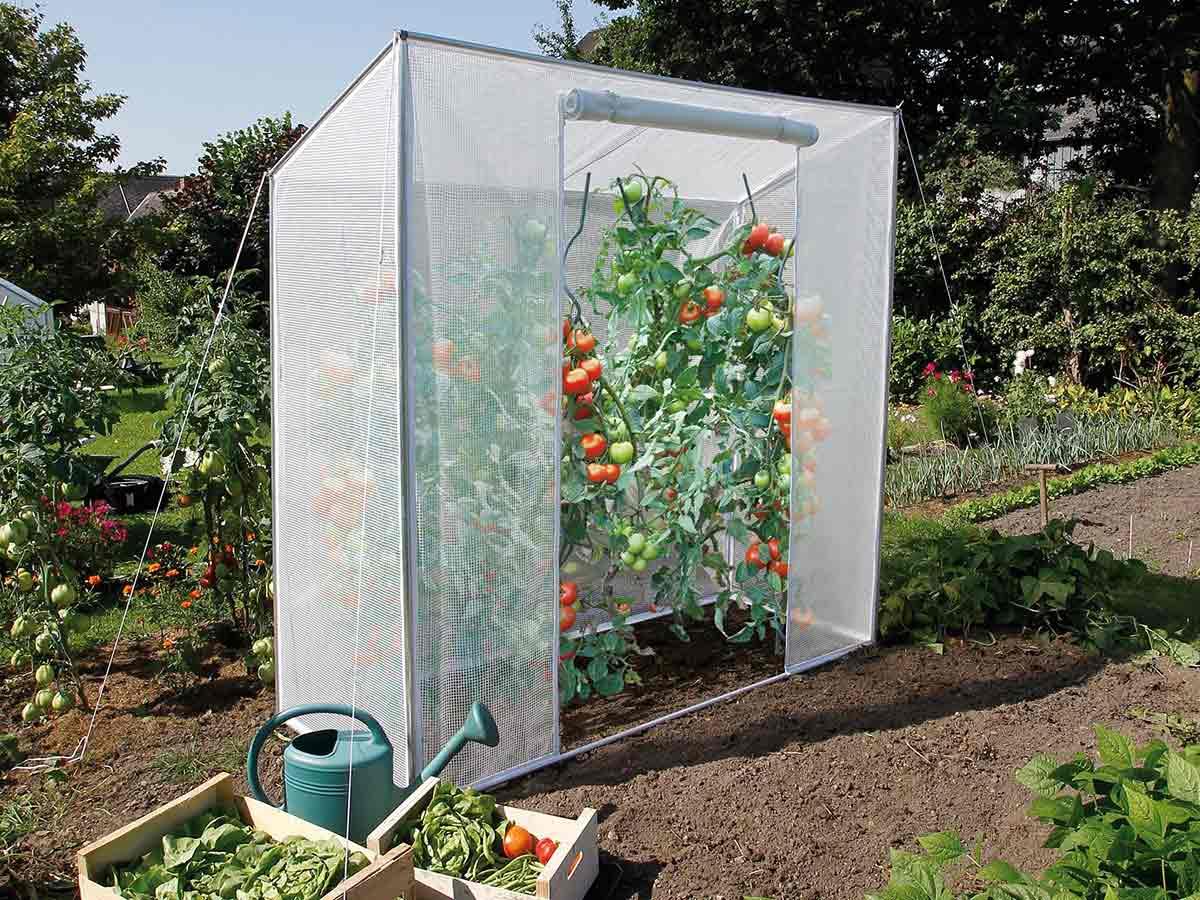 Serre à tomates 200 cm